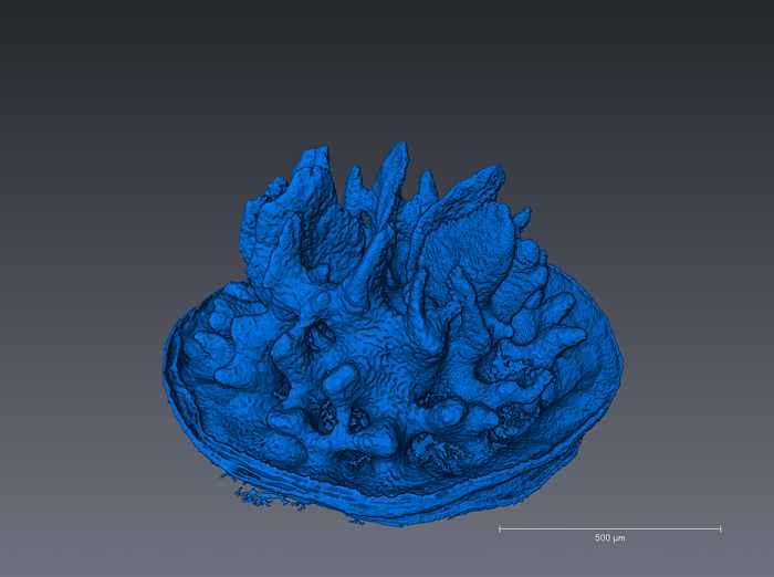 deformación de un esqueleto coral en 3D