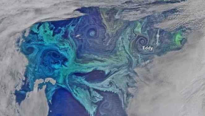 florecimientos de fitoplancton en el Océano Antártico