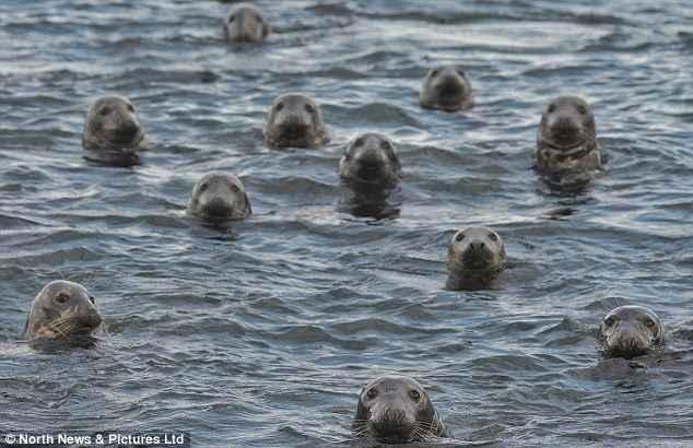 un grupo de focas de puerto