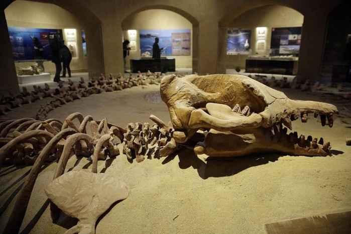fósil de Basulosaurus