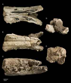 fósiles de Albicetus oxymycterus