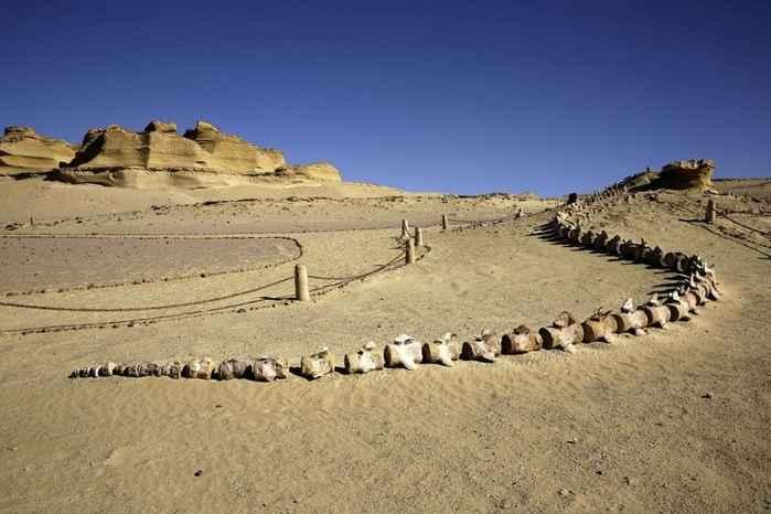 fósiles en Wadi al-Hitan