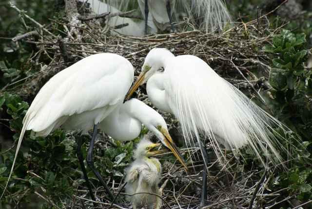 garcetas de los Everglades