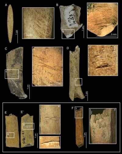 marcas humanas en huesos de ciervo extinto de Panamá
