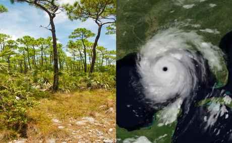 huracanen y los anillos de los árboles
