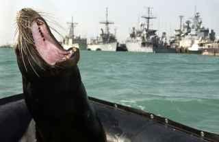 león marino de la Armada de EE.UU.