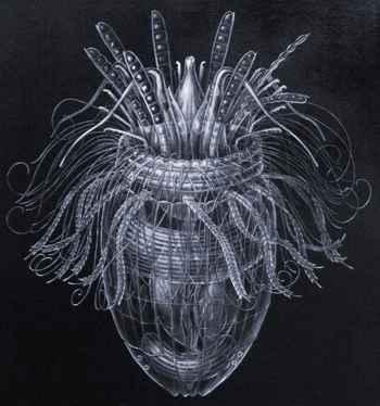 loricífero Pliciloricus enigmatus