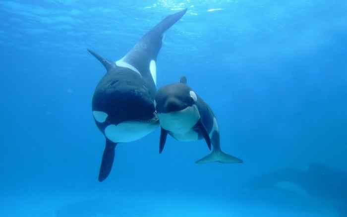 madre e hijo orca