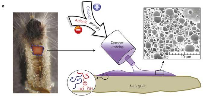 pegamento submarino del gusano castillo de arena