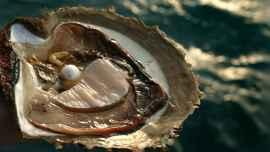 perla en una ostra