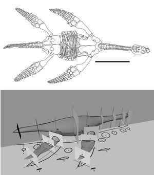 plesiosaurio natación como los pingüinos