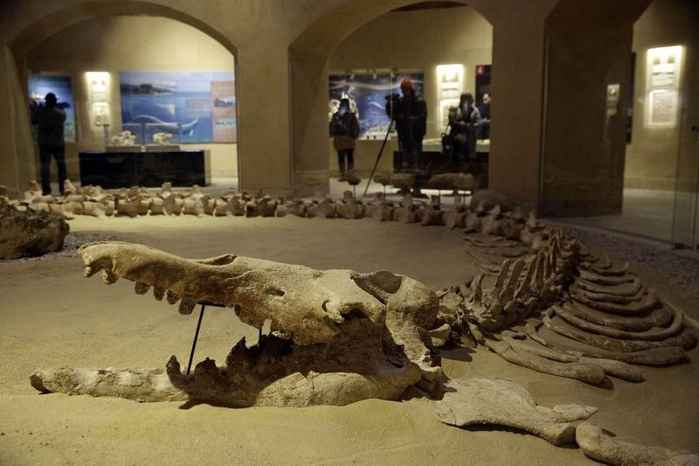 sala del museo de Wadi al-Hitan
