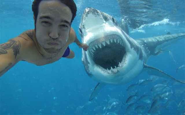 falsa selfie de tiburón de Pete Wentz