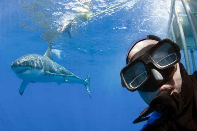 buzo se hace una selfie con un tiburón