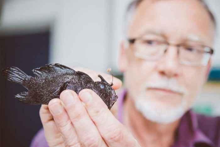 señuelo del pez sapo negro (Antennarius striatus)