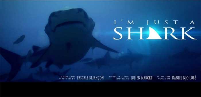 Sólo soy un tiburón