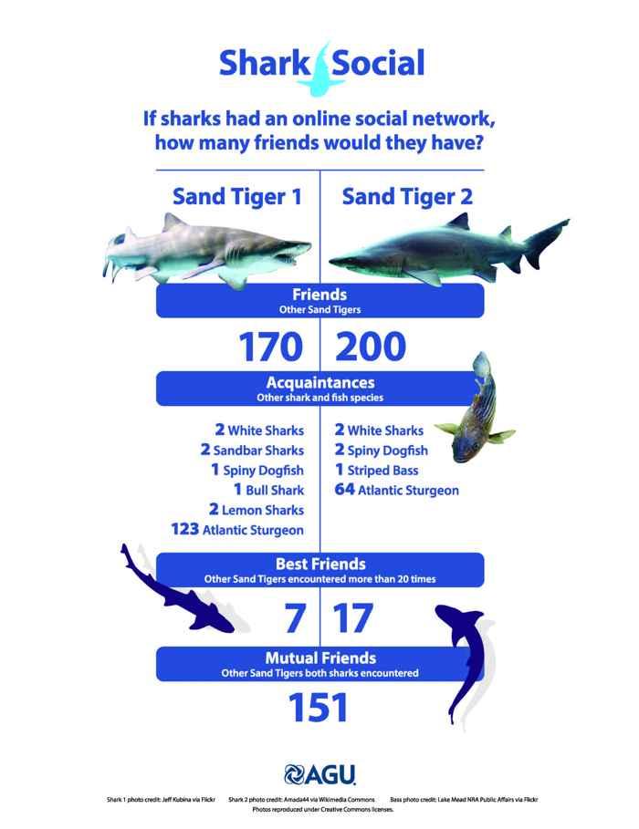 tiburones en Facebook
