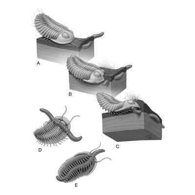 Trilobites atacando