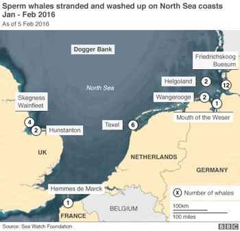 varamientos de cachalotes en el Mar del Norte