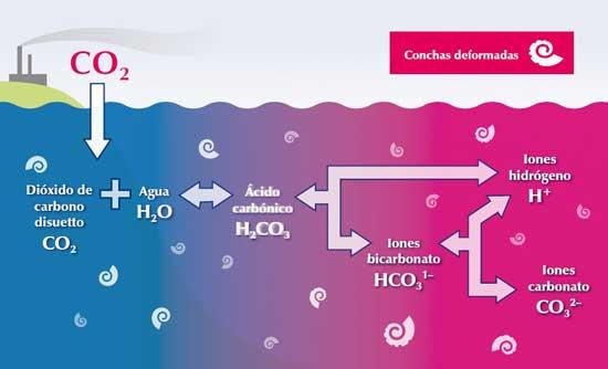 química de la acidez en los océanos