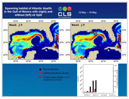 animación del área de impacto del desove de atún rojo en el Golfo de México