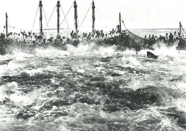 antigua pesca de la almadraba en Barbate, 1950