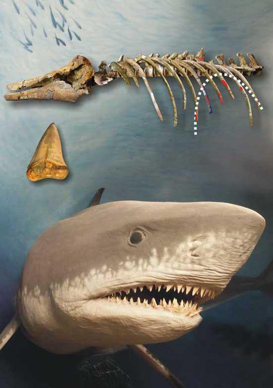 ataque de tiburón a delfín hace 4 millones de años