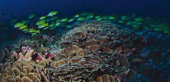 banco de peces en el fondo marino