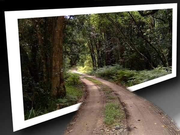 Un camino sale de la foto