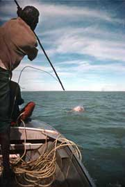 caza tradicional del dugongo