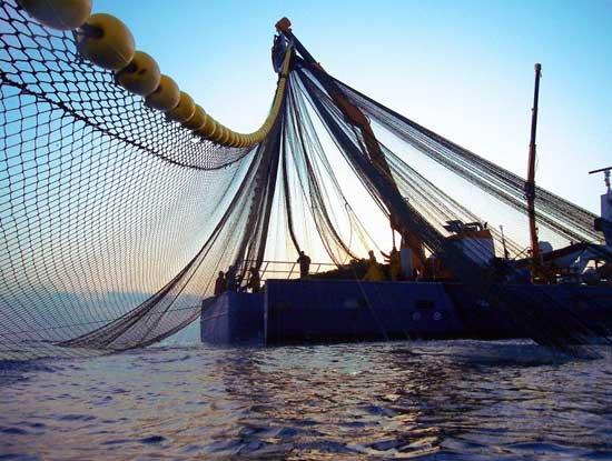 cerqueros recogiendo las redes