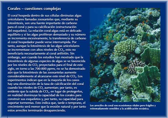 corales, cuestiones complejas
