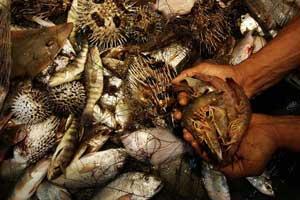 descartes por pesca de langostino