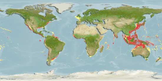 distribución anguilla japonica
