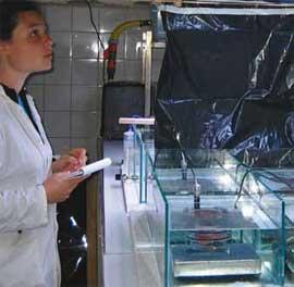 experimentos sobre la acidificación