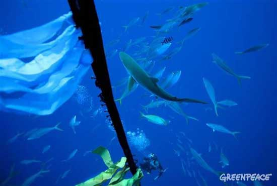 tiburones y un banco de peces alrededor de un FAD