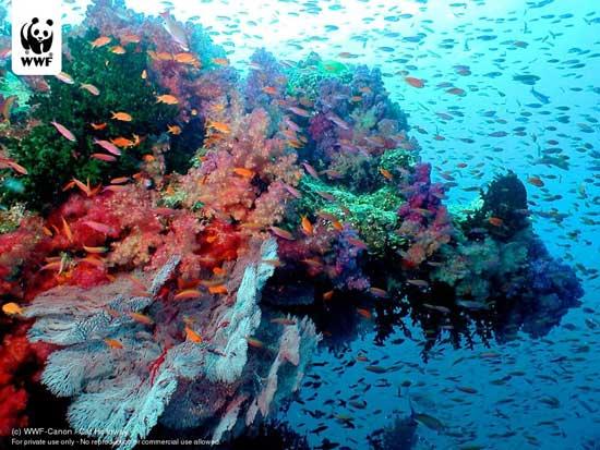 fragilidad de los corales
