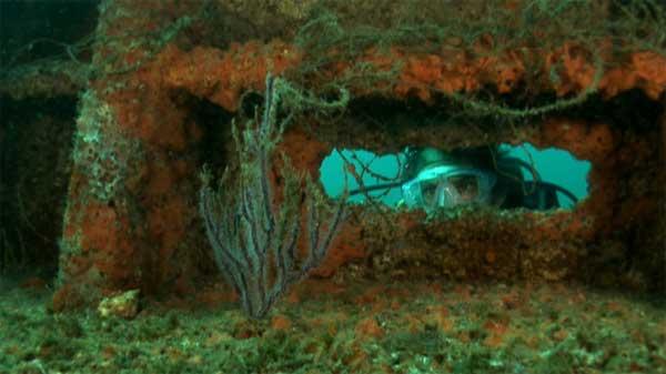 gorgonias en el Golfo de México, el buzo es Jesús Molino de Oceana