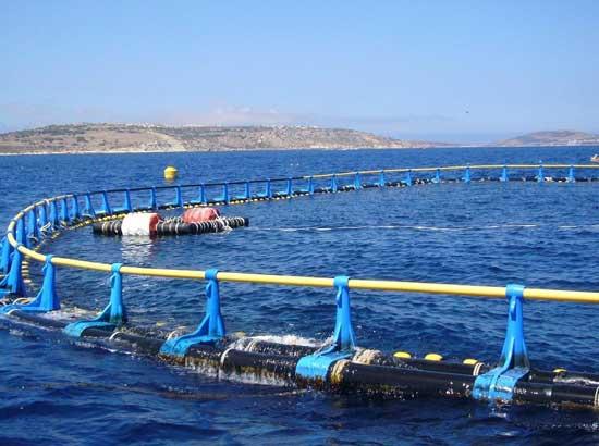 granja de atunes