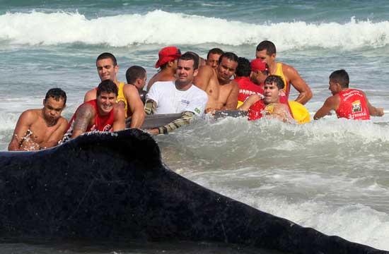 intento-rescate-ballena-varada-geriba-brasil-3.jpg