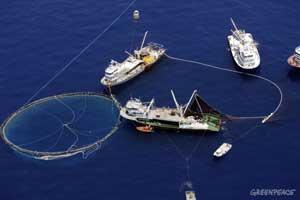 jaula de transporte de atún rojo