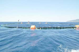 jaulas engorde de atún rojo