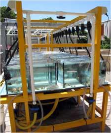 laboratorio climático, acuarios de mini-arrecifes