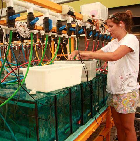 Mirta Zupan, del laboratorio climático para arrecifes de coral