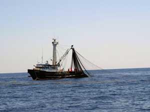 pesca  de atún rojo al cerco