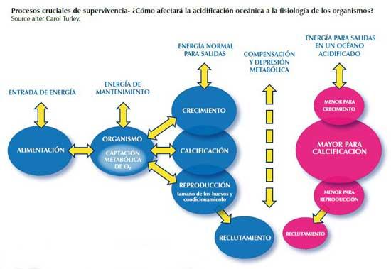 procesos cruciales en la supervivencia a la acidificación