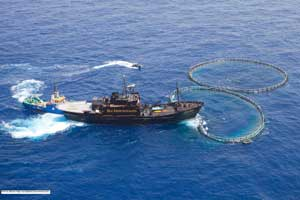 Sea Shepherd, campaña Atún Mediterráneo 2010