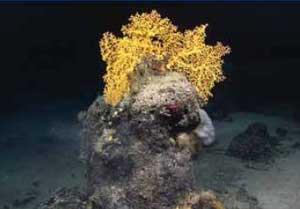 sedimentos del lecho marino