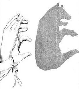 sombra de cerdo
