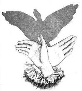 sombra de paloma